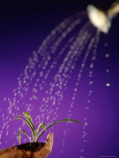Water Pouring Onto Plant in Hand-Jim McGuire-Photographic Print