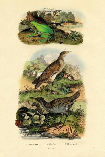 Water Rail, 1833-39--Giclee Print