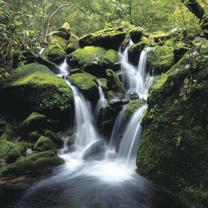 Water Rushing Down Cascading Moss-Covered Waterfall