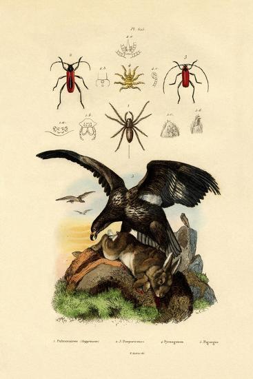 Water Spider, 1833-39--Giclee Print