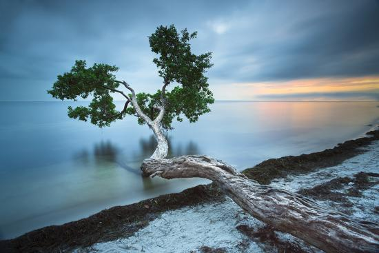 Water Tree 10 Color-Moises Levy-Photographic Print