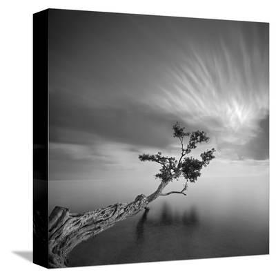 Water Tree, c.2006-Moises Levy-Stretched Canvas Print