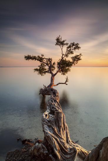 Water Tree III-Moises Levy-Photographic Print