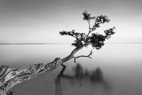 Water Tree IX-Moises Levy-Photographic Print