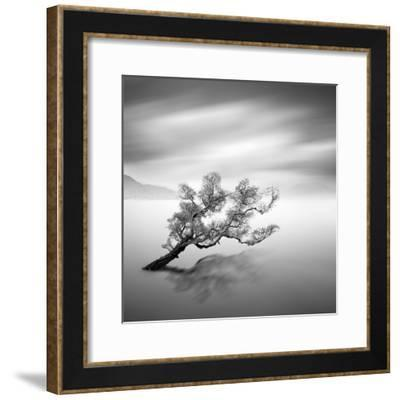 Water Tree VI-Moises Levy-Framed Photographic Print