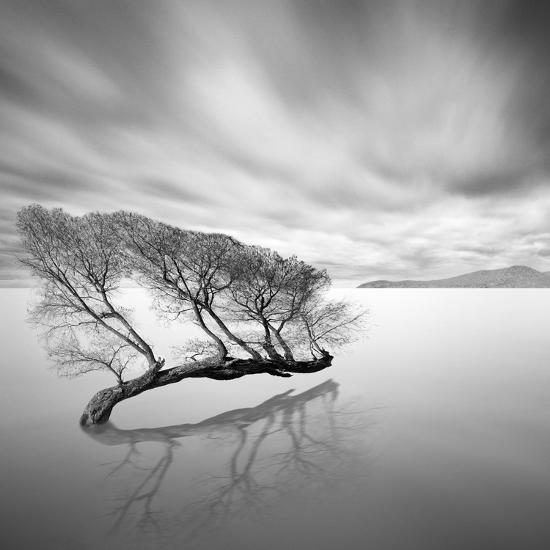 Water Tree VII-Moises Levy-Photographic Print