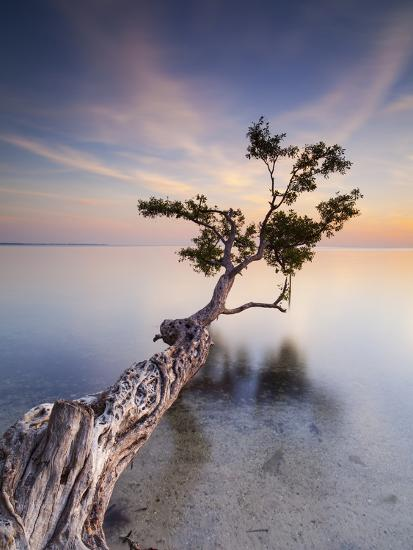 Water Tree X-Moises Levy-Photographic Print