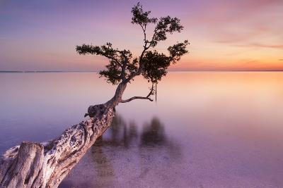 Water Tree XI-Moises Levy-Photographic Print