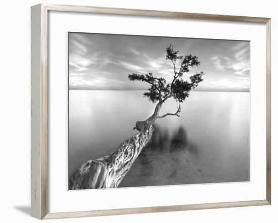 Water Tree XIII-Moises Levy-Framed Premium Photographic Print