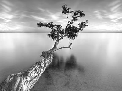 Water Tree XIII-Moises Levy-Photographic Print