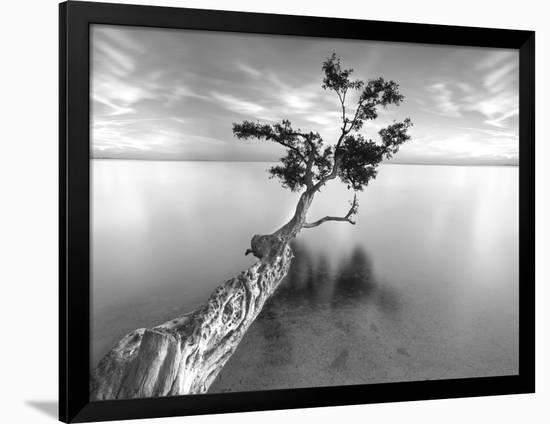 Water Tree XIII-Moises Levy-Framed Photographic Print