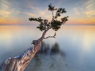 Water Tree XIV-Moises Levy-Photographic Print