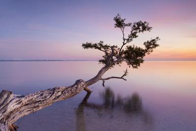 https://imgc.artprintimages.com/img/print/water-tree-xv_u-l-q1aic5a0.jpg?p=0