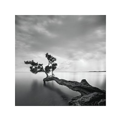 Water Tree-Moises Levy-Giclee Print