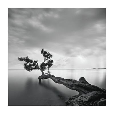 https://imgc.artprintimages.com/img/print/water-tree_u-l-f4e0bj0.jpg?p=0