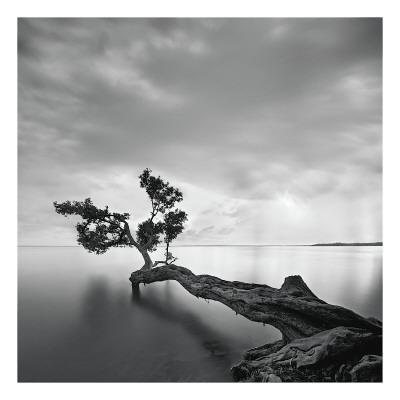 https://imgc.artprintimages.com/img/print/water-tree_u-l-f4e0bl0.jpg?p=0