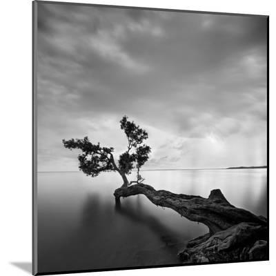 Water Tree-Moises Levy-Mounted Print