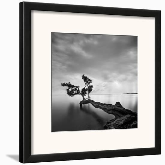Water Tree-Moises Levy-Framed Art Print