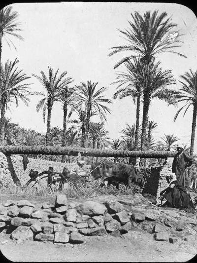 Water Wheel, Egypt, C1890-Newton & Co-Photographic Print