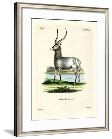 Waterbuck--Framed Giclee Print