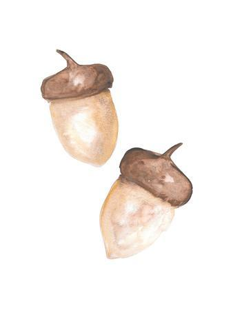 https://imgc.artprintimages.com/img/print/watercolor-acorns_u-l-f95dr90.jpg?p=0