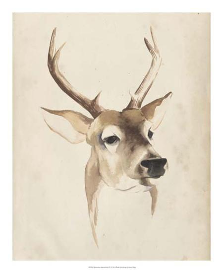Watercolor Animal Study IV-Grace Popp-Giclee Print
