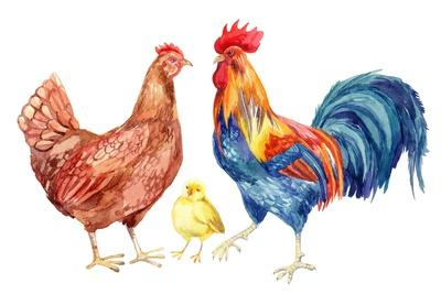 Hen home decor Nursey art wall Chicken watercolor decor Watercolor painting original Chicks and chicken Paint Illustration animal watercolor