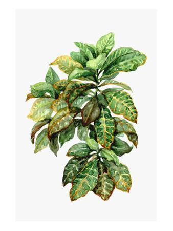 Watercolor Croton Leaves