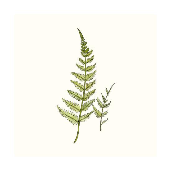 Watercolor Forest Ferns-Natasha Marie-Premium Giclee Print