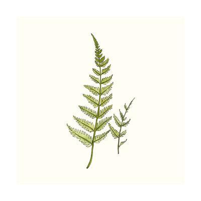 https://imgc.artprintimages.com/img/print/watercolor-forest-ferns_u-l-q12y8980.jpg?p=0