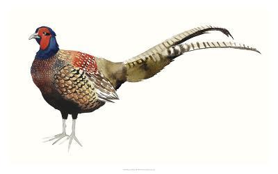 Watercolor Pheasant II-Grace Popp-Giclee Print