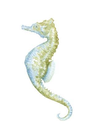 https://imgc.artprintimages.com/img/print/watercolor-seahorse-ii_u-l-pssp170.jpg?p=0