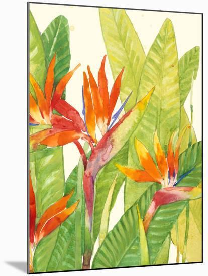 Watercolor Tropical Flowers IV-Tim OToole-Mounted Premium Giclee Print