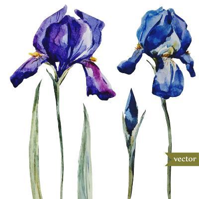 Watercolor Vector Drawing Flowers Blue Iris, Isolated Object, Botanical Floral Illustration Card-Anastasia Zenina-Lembrik-Art Print