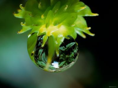 Waterdrops--Photographic Print