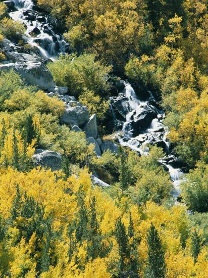 Waterfall and Aspen Fall Colors in the High Sierra in October-Rich Reid-Photographic Print
