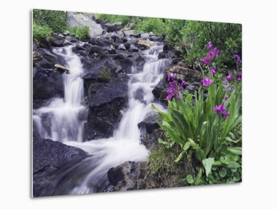 Waterfall and Wildflowers, Ouray, San Juan Mountains, Rocky Mountains, Colorado, USA-Rolf Nussbaumer-Metal Print