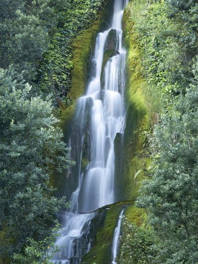Waterfall, Centennial Gardens, Napier, Hawkes Bay, North Island, New Zealand-David Wall-Photographic Print
