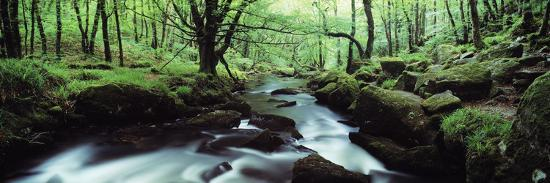 Waterfall in a Forest, Golitha Falls, River Fowey, Cornwall, England--Photographic Print
