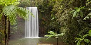 Waterfall in a Forest, Millaa Millaa Falls, Atherton Tableland, Queensland, Australia