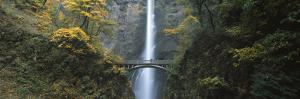 Waterfall in a Forest, Multnomah Falls, Columbia River Gorge, Multnomah County, Oregon, USA
