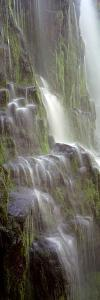 Waterfall in a Forest, Proxy Falls, Three Sisters Wilderness Area, Willamette National Forest, L...