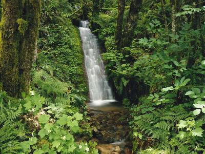 Waterfall in Lush Forest-Craig Tuttle-Photographic Print