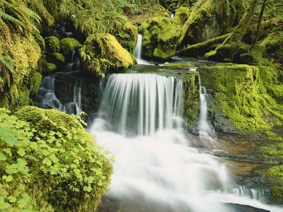 Waterfall in Willamette National Forest, Oregon, USA-Stuart Westmoreland-Photographic Print