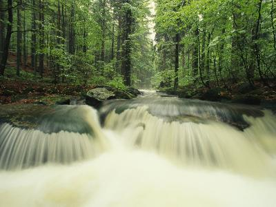 Waterfall Time Exposure, Bayerischer Wald National Park, Germany-Norbert Rosing-Photographic Print
