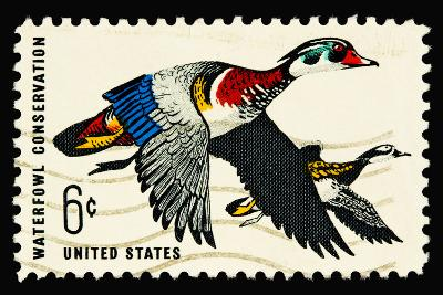 Waterfowl 1968-LawrenceLong-Art Print
