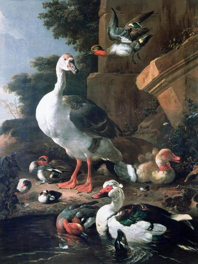 Waterfowl in a Classical Landscape, 17th Century-Melchior de Hondecoeter-Giclee Print
