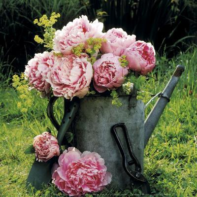 Watering Can And Peonies-James Guilliam-Art Print
