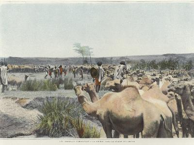 Watering the Camels at the Source in the Desert--Photographic Print