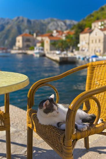 Waterside Cafe and Cat, Perast, Bay of Kotor, UNESCO World Heritage Site, Montenegro, Europe-Alan Copson-Photographic Print